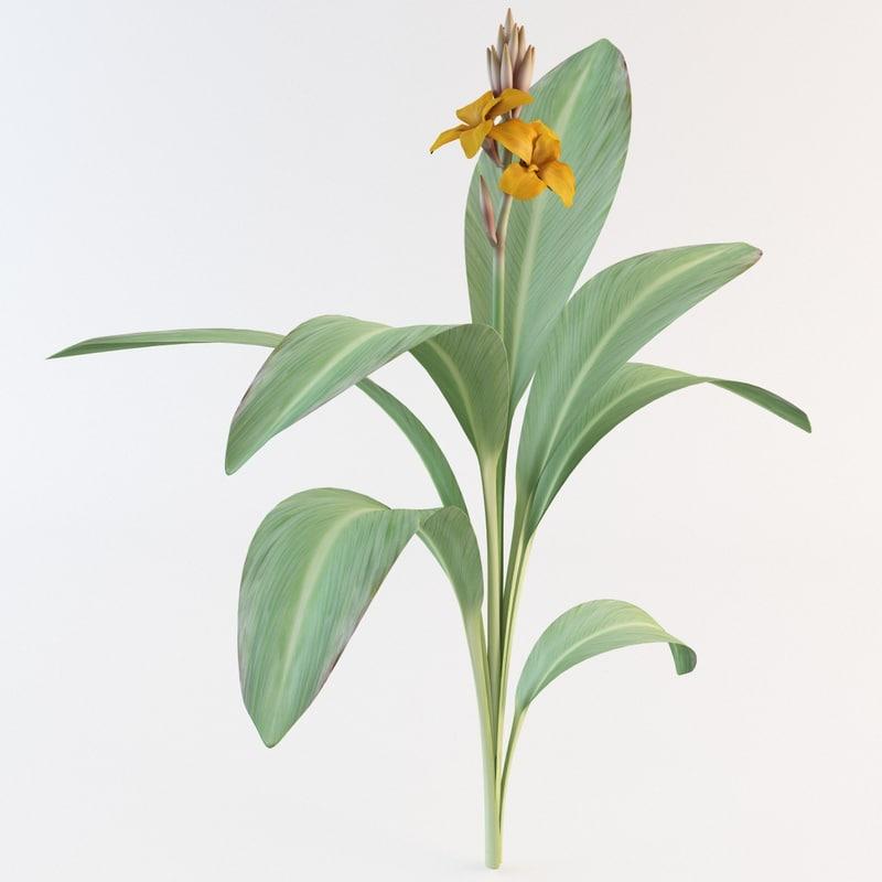 max canna flower