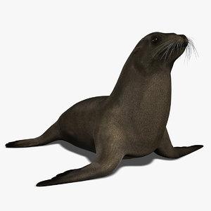 3d model california sea lion fur