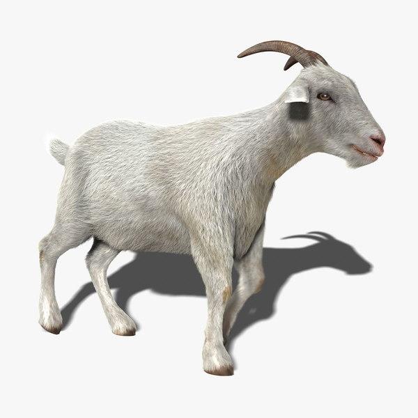 goat fur animation 3d model