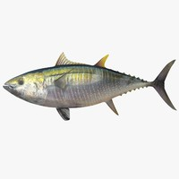 max yellowfin tuna