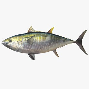 max yellowfin tuna