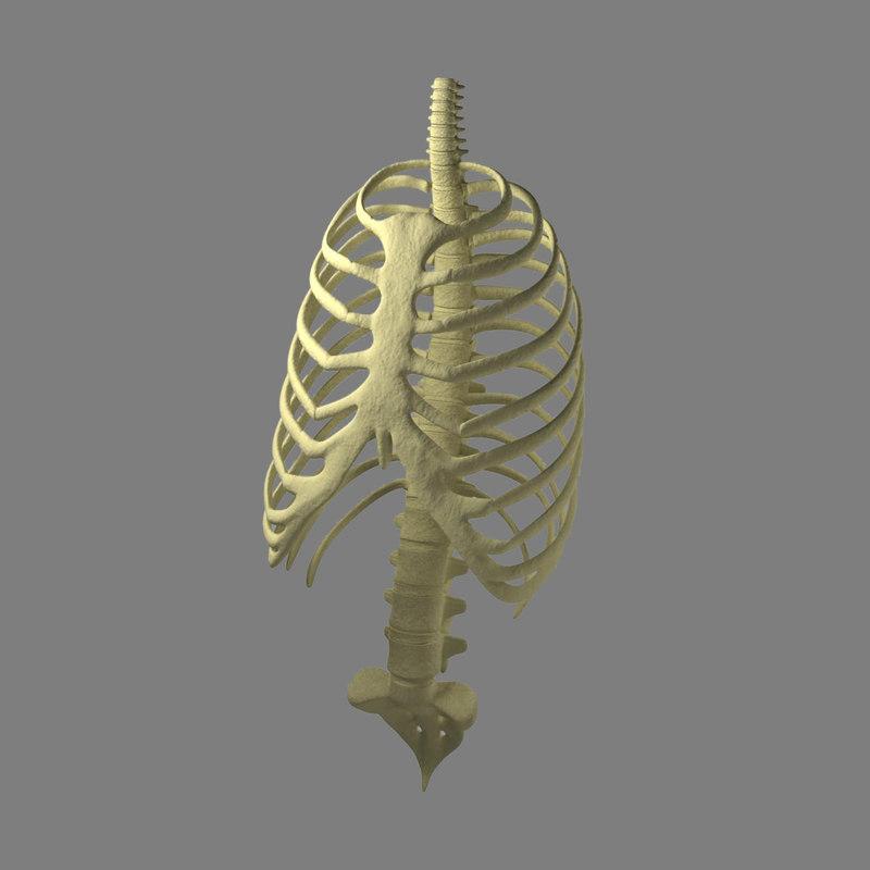 max human cage rib