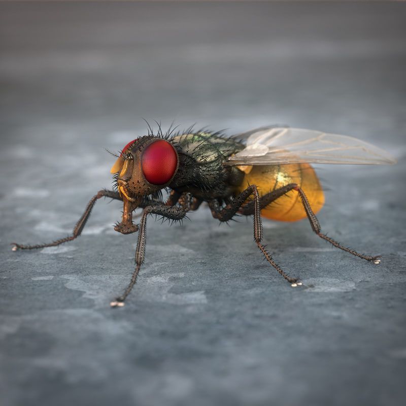 house fly 3d 3ds