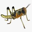 Locust 3D models