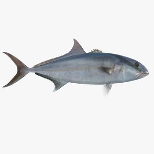 3ds max amberjack amber jack
