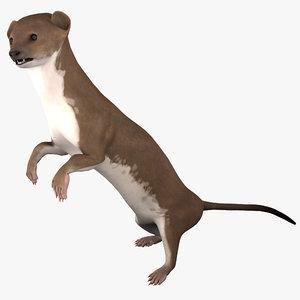 3d weasel pose 2 model