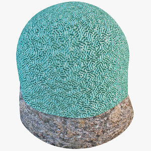 brain coral max