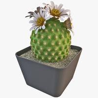 oroya peruviana cactus 3d model