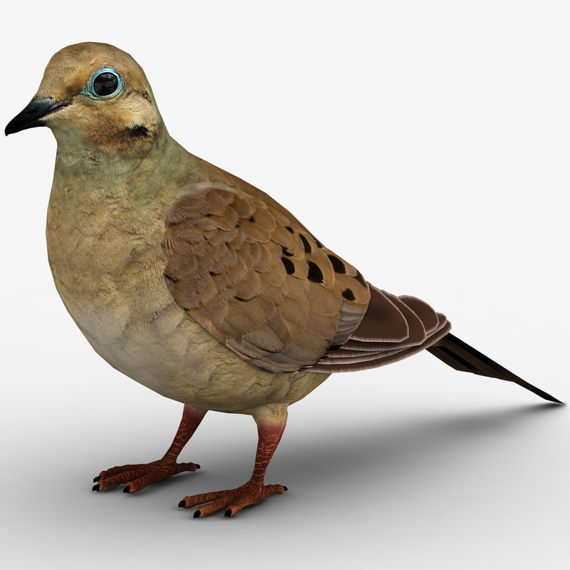 3dsmax mourning dove