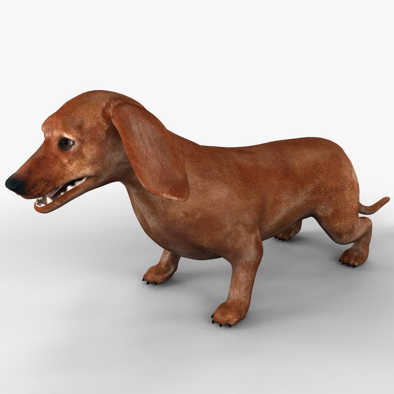 dachshund dog 3d c4d