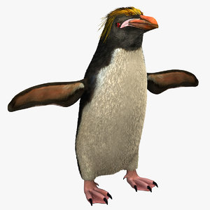 macaroni penguin eudyptes chrysolophus 3d model