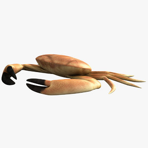 max crab modelled