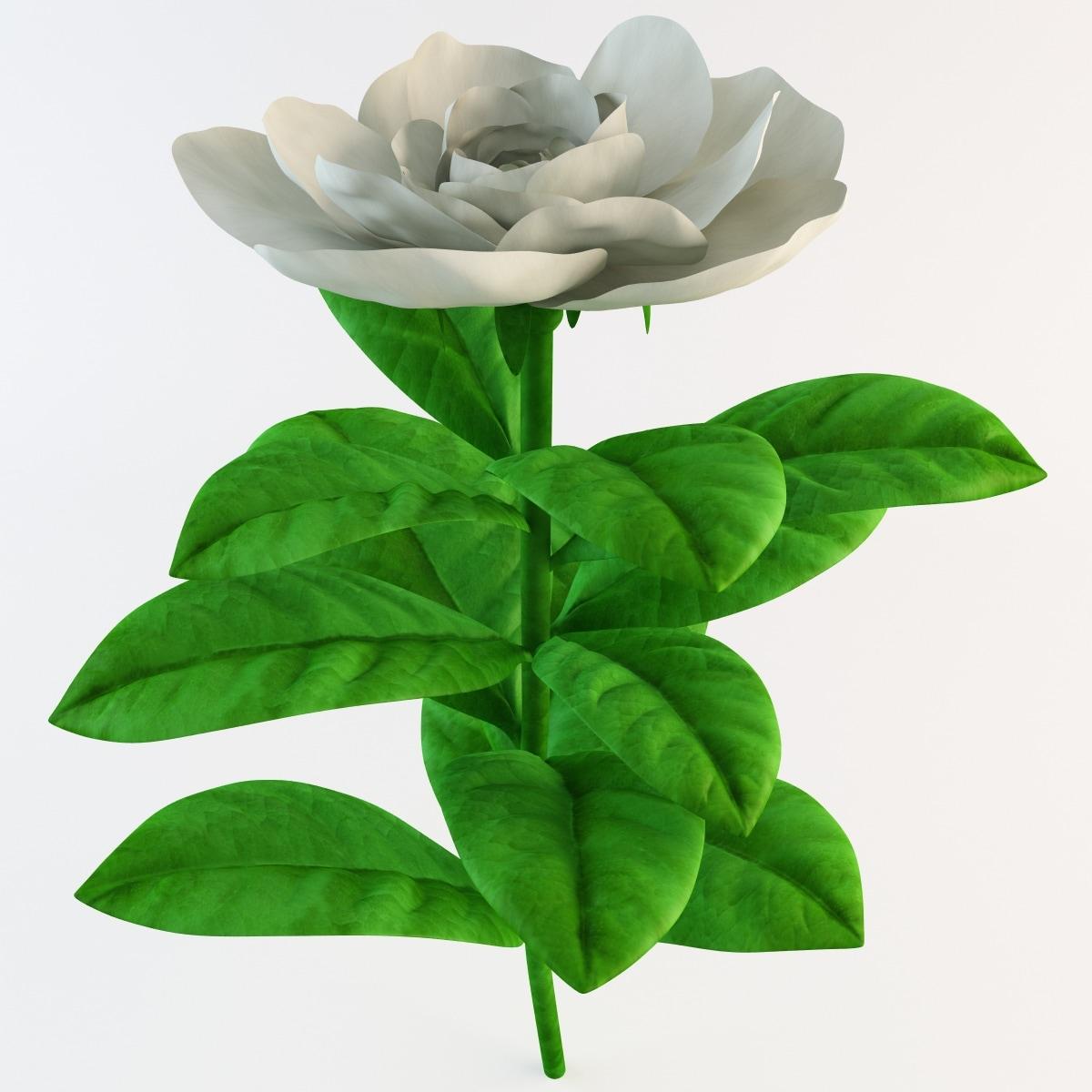 gardenia gardening flower 3d model