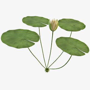 water lily 3d max