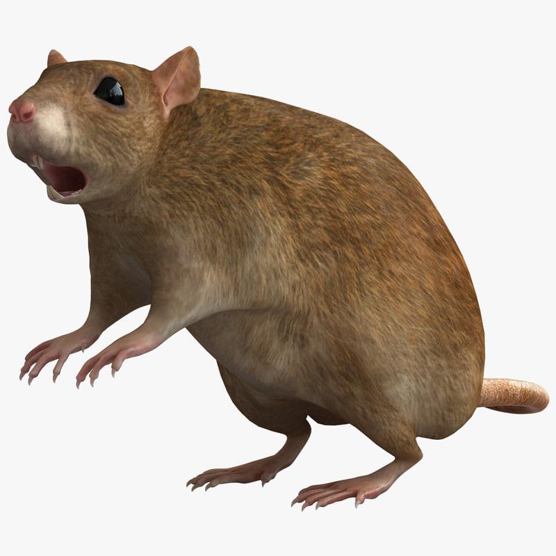 lightwave rat rodent modelled