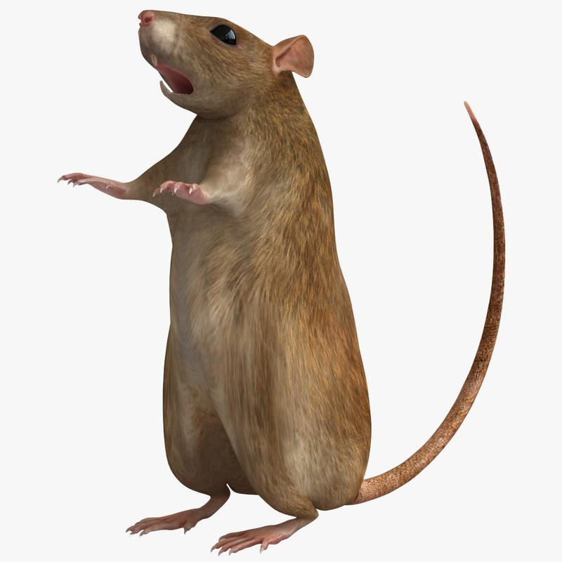 rat modelled 3d model