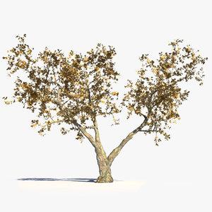 3d realistic oak tree autumn model