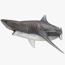tiger shark 3D models