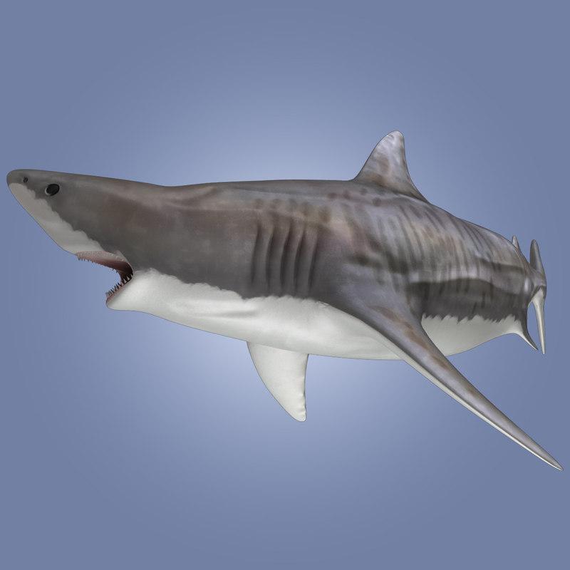 tiger shark rigged 3d model