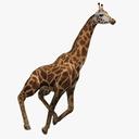 giraffe 3D models