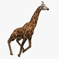 ma giraffe fur tongue animation