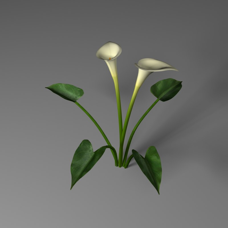 3ds calla lily