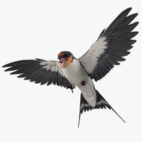 maya hirundo rustica barn swallow