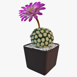 mammillaria sphaerica blooms 3d model