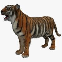 tiger 2 max