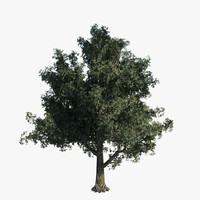 tree - oak 3d obj