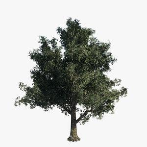 tree - oak 3d obj