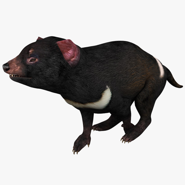 3d model tasmanian devil pose 1