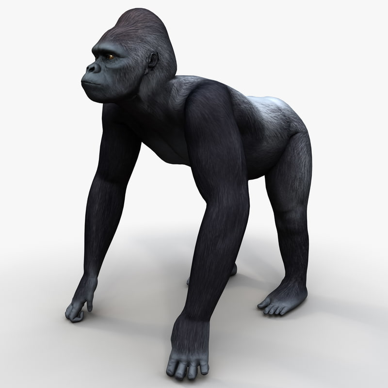 gorilla pose 2 3d model