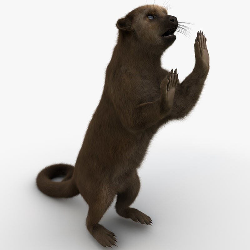 3d model of kinkajou pose 3 fur