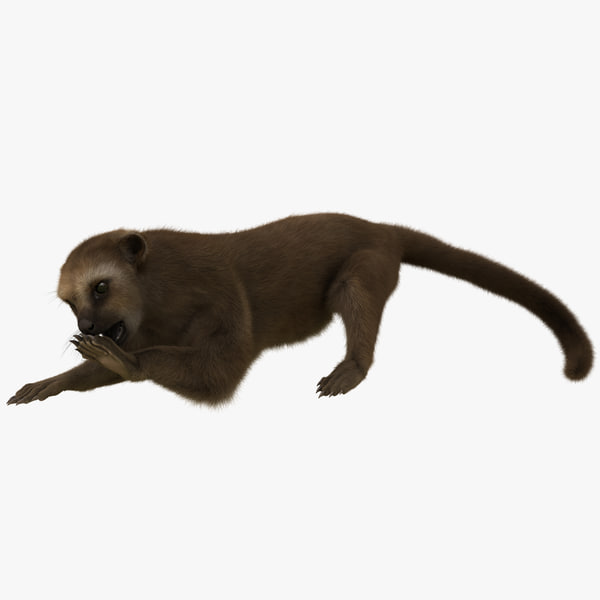 3d model kinkajou pose 4 fur