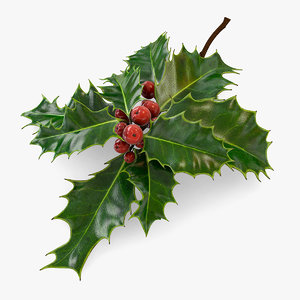 mistletoe holly sprig