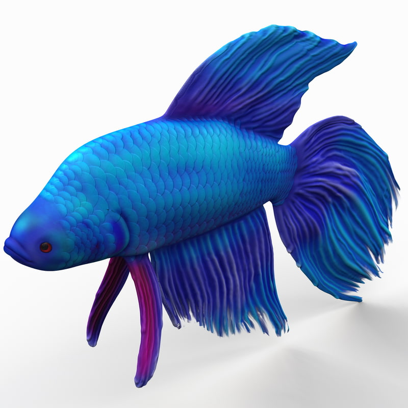 3ds max betta fish
