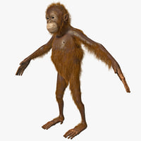 3ds max orangutan baby fur ape