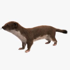 3d model weasel fur