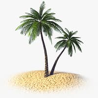 tropical palm tree 3d model