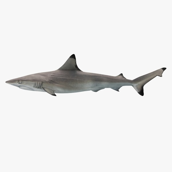 blacktip reef shark 3ds