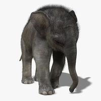 Baby Elephant (FUR)