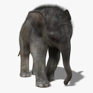 maya photorealistic baby elephant fur