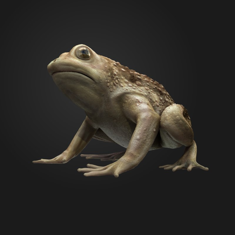 rigged frog animation 3d max