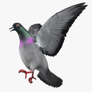 3d columba livia pigeon model