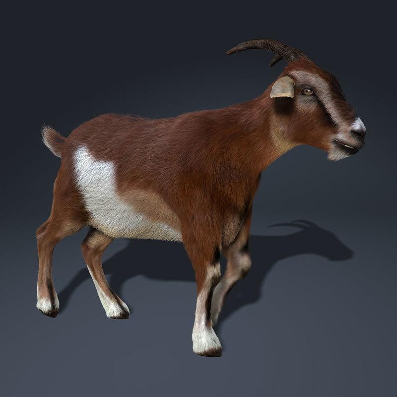 goat hair animation 3d ma