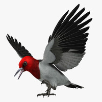 melanerpes erythrocephalus red-headed woodpecker 3d model