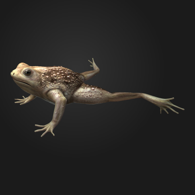 3ds max frog