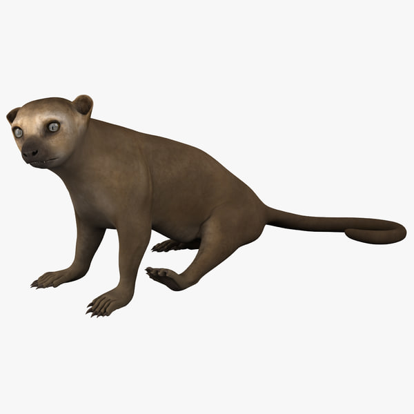 3d kinkajou pose model