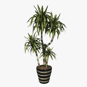 3dsmax indoor plant dracaena lisa